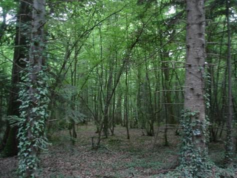 Foresta bretone