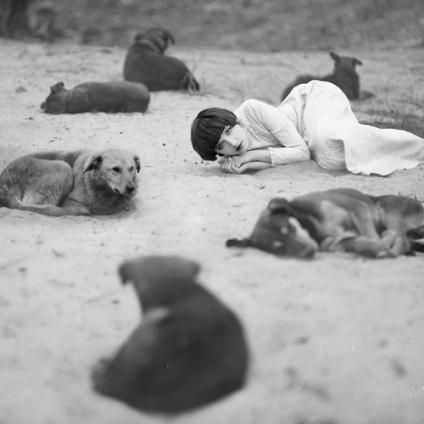 los-perros-romanticos