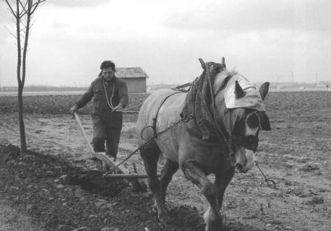 contadino-che-ara-la-terra